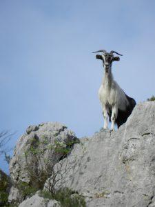Ziege statt Schaf? Sag uns, was verkehrt ist!